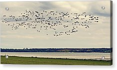 Flock Of Birds Acrylic Print by Svetlana Sewell