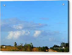 Flock Of Egrets Acrylic Print by Andres LaBrada