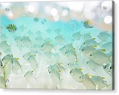 Flock Of Fish Acrylic Print by Danilovi