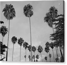 Flock Of Palm Trees Acrylic Print