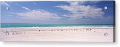 Flock Of Seagulls On The Beach, Lido Acrylic Print