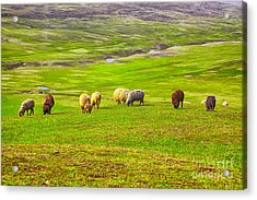 Flock Of Sheep Acrylic Print by Gabriela Insuratelu
