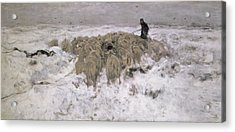 Flock Of Sheep In The Snow Acrylic Print by Anton Mauve