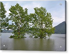 Flooded Black Polar Trees Acrylic Print