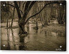 Flooded Tree Acrylic Print