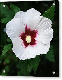 Acrylic Print featuring the photograph Flora 2 by Mary Beth Landis