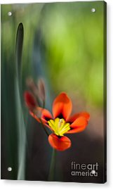 Flora Counterpoint Acrylic Print by Mike Reid