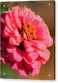 Flora Acrylic Print by Rhonda Humphreys