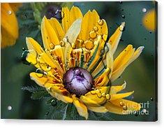 Floral 3 Acrylic Print