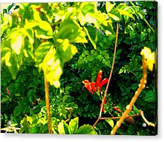 Floral 4 Acrylic Print by Dan Twyman