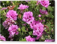 Floral Beauties Acrylic Print