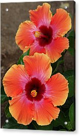 Acrylic Print featuring the photograph Floral Beauty 2  by Christy Pooschke