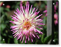Acrylic Print featuring the photograph Floral Beauty 3  by Christy Pooschke