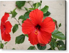 Acrylic Print featuring the photograph Floral Beauty  by Christy Pooschke