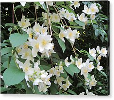 Acrylic Print featuring the photograph Floral Cascade by Pema Hou