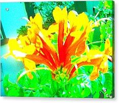 Floral Acrylic Print by Dan Twyman