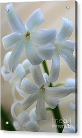 Floral Design Acrylic Print by Neal Eslinger