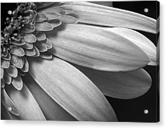 Acrylic Print featuring the photograph Floral Detail by Dawn Currie