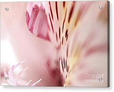 Floral Dreams Acrylic Print by Pamela Gail Torres