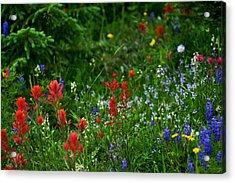 Floral Explosion Acrylic Print by Jeremy Rhoades