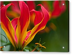 Acrylic Print featuring the photograph Floral Flames by Sabine Edrissi