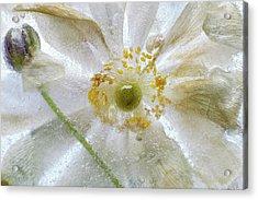 Floral Freeze Acrylic Print