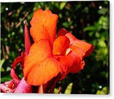 Floral Orange Acrylic Print by Van Ness