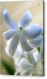 Floral Peace No.2 Acrylic Print by Neal Eslinger