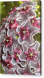 Floral Presence - Signed Acrylic Print