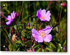 Floral Saturation Acrylic Print by Sheryl Burns