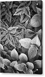 Acrylic Print featuring the photograph Floral Tones At Biltmore by Ben Shields