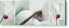 Floral Whites Acrylic Print by Priska Wettstein