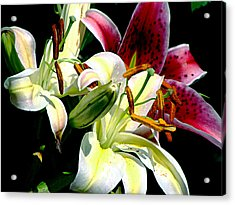 Acrylic Print featuring the photograph Florals In Contrast by Ira Shander