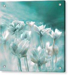 Flores Secas II Acrylic Print