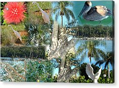 Florida Birds And Trees Acrylic Print