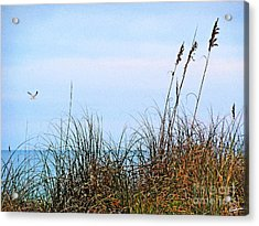 Acrylic Print featuring the photograph Florida Dunes by Melissa Sherbon