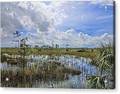 Florida Everglades 0173 Acrylic Print by Rudy Umans