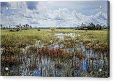 florida Everglades 0177 Acrylic Print by Rudy Umans