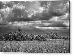 Florida Everglades 0184bw Acrylic Print by Rudy Umans
