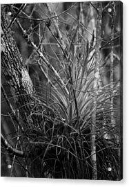 Acrylic Print featuring the photograph Florida Everglades by Joseph G Holland