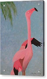 Florida Flamingo Acrylic Print by Tim Townsend