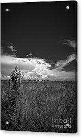 Florida Flat Land Acrylic Print