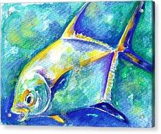 Florida Keys Permit Acrylic Print