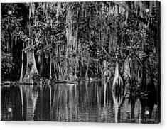 Florida Naturally 2 - Bw Acrylic Print by Christopher Holmes