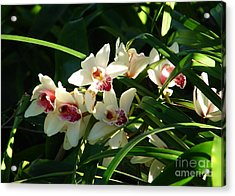 Florida Orchids Acrylic Print by Lew Davis