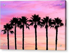Florida Palm Trees Acrylic Print