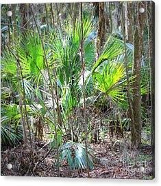 Florida Palmetto Bush Acrylic Print by Carol Groenen