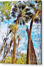Florida Skies And Palms Acrylic Print by Judy Via-Wolff