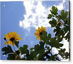 Acrylic Print featuring the photograph Florida Sunshine1 by Megan Dirsa-DuBois