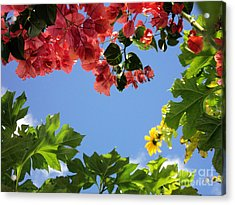Acrylic Print featuring the photograph Florida Sunshine2 by Megan Dirsa-DuBois